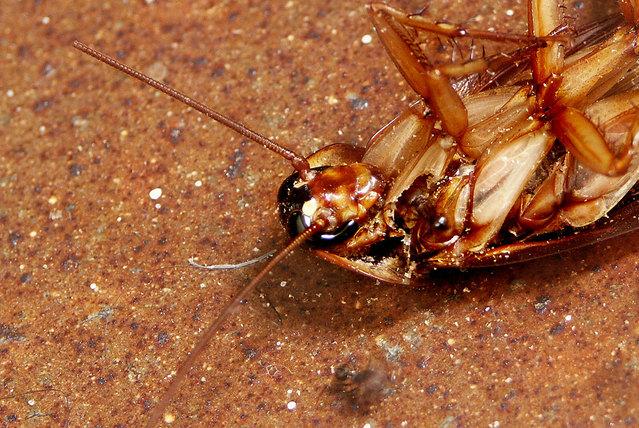 Pharmcle Ph Dead Roach Photo