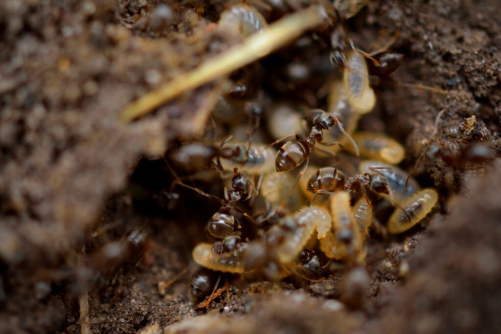 Pharmcle Ph The Economic Cost Of Termite Infestation