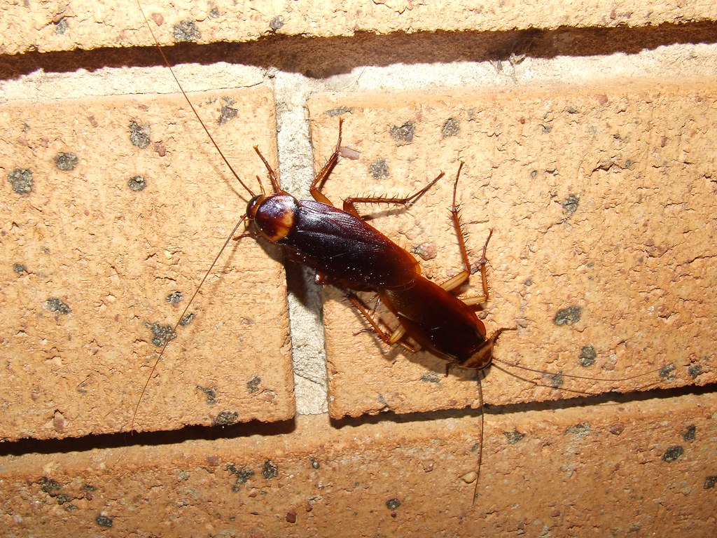 Pharmcle Ph Pests Are Bad For Business